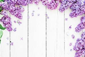 Обои Сирень Доски Цветы