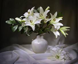 Фотография Лилии Ваза Белый Цветы