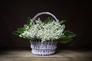 Фото Ландыши Корзинка Белый Цветы