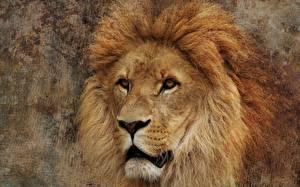 Картинка Львы Морда
