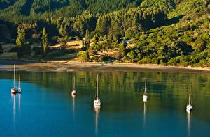 Фотография Новая Зеландия Берег Реки Леса Корабли Парусные Picton