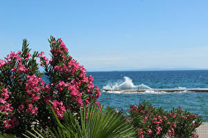 Обои Опатия город Хорватия Олеандр Море Волны Пирсы Природа