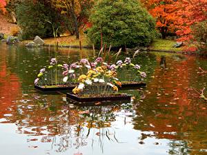 Картинки Парки Пруд Хризантемы Кусты Природа