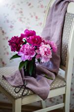 Фотография Пионы Стулья Цветы