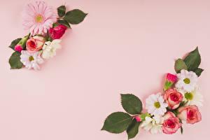 Фотографии Розы Хризантемы Герберы Цветной фон Цветы