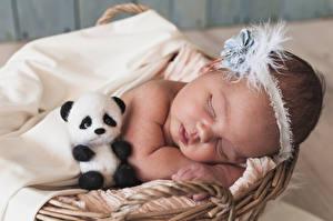 Фотографии Мишки Грудной ребёнок Сон Дети