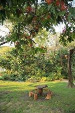 Обои Таиланд Бангкок Парки Ветвь Стол Скамья Природа