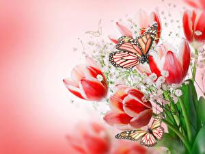 Фотографии Тюльпаны Бабочки Данаида монарх Цветной фон Цветы