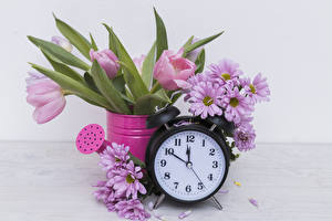 Фото Тюльпаны Хризантемы Часы Будильник Розовый Цветы