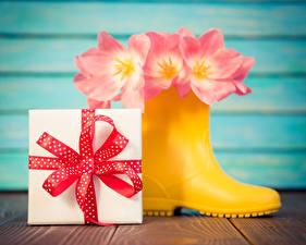 Картинка Тюльпаны Сапоги Розовый Подарки Цветы