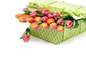 Обои Тюльпаны Белый фон Коробка Бантик Цветы