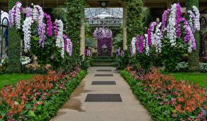 Фото Штаты Сады Орхидеи Антуриум Дизайн Аллея Longwood Gardens