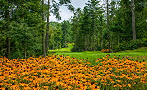 Картинка Штаты Парки Газания Газон Деревья North Carolina Природа