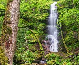 Обои США Парки Водопады Ствол дерева Скала Мох Great Smoky Mountains National Park Природа