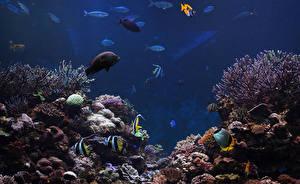 Фотографии Подводный мир Кораллы Рыбы