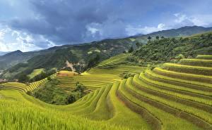 Картинка Вьетнам Поля Холм Природа