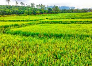 Фотография Вьетнам Поля Lam Dong Природа