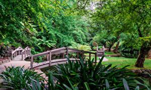 Фотографии Австралия Парки Мост Деревья Alfred Nicholas Memorial Gardens Sherbrooke Природа