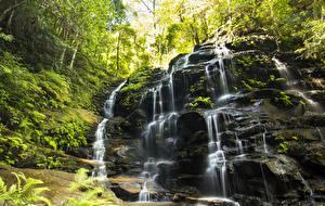 Фото Австралия Водопады Утес Мох Wentworth Falls Природа