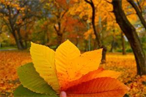 Картинки Осенние Листва Природа