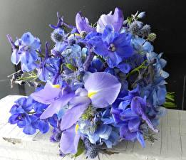 Картинка Букеты Ирисы Орхидеи Гортензия Голубой Цветы