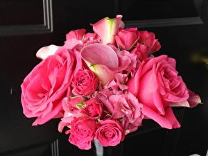 Фотография Букеты Розы Белокрыльник Розовый Цветы