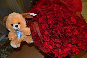 Фото Букеты Розы Мишки Красный цветок