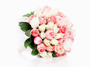 Картинки Букеты Розы Белый фон Цветы