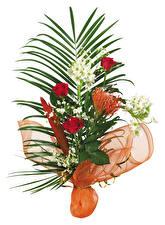 Картинки Букет Розы Белый фон цветок