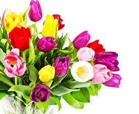 Обои Букеты Тюльпаны Вблизи Белый фон Цветы