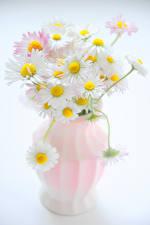 Фотография Ромашки Серый фон Ваза Цветы