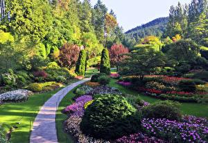 Обои Канада Сады Дизайн Аллея Кусты Деревья Butchart Gardens