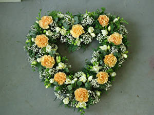 Картинки Гвоздики Фрезия Серый фон Сердца Дизайн цветок
