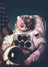 Фотография Коты Креатив Космонавты Униформа Шлем Животные