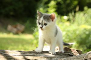 Картинки Кошки Котята Смотрит Животные