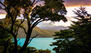 Фотографии Чили Гора Озеро Ветвь Patagonia Природа
