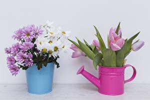 Обои Хризантемы Тюльпаны Ведро Серый фон