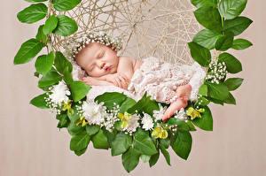Фотография Цветной фон Грудной ребёнок Спит Дизайн Дети