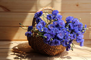 Обои Васильки Вблизи Корзинка Синий Цветы