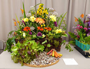 Фото Георгины Морозник Морковь Цветы