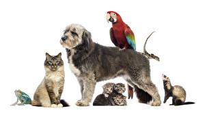 Обои Собаки Кот Лягушки Попугаи Куньи Белом фоне Котята Ящерица животное