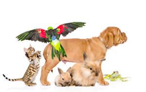 Фото Собаки Кошки Кролики Попугаи Лягушки Белый фон Шарпей Животные