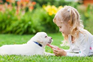 Картинка Собака Девочки Щенки Рука ребёнок