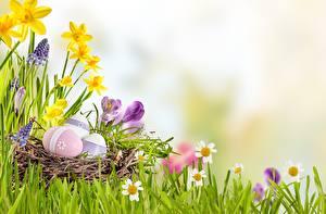 Картинки Пасха Яйца Трава Цветы