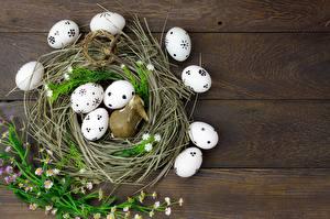 Картинка Пасха Яйца Гнездо Пища