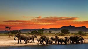 Картинки Слоны Африка животное