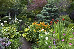 Картинки Англия Сады Космея Ель Кусты Walsall Garden