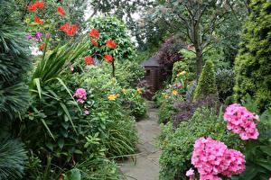 Картинка Англия Сады Флоксы Кусты Walsall Garden