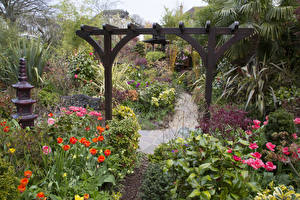 Обои Англия Сады Тюльпаны Кусты Walsall Garden