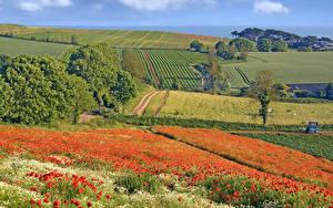 Фотография Англия Пейзаж Поля Маки Деревья Budleigh Salterton Природа
